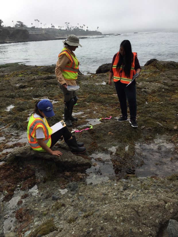 Cal State Fullerton students Amber Sanderson, left, and Shannon Chou, right, measure photosynthesis in golden rockweed exposed during low tide with Jennifer Burnaford, associate professor of biological science. (Photo courtesy of Cal State Fullerton)