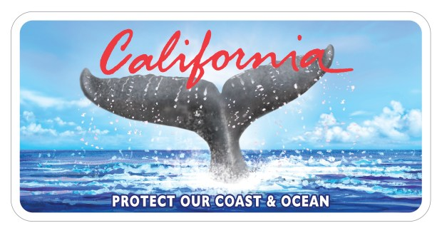 Current Whale Tail license plate. Image by Bill Atkins.