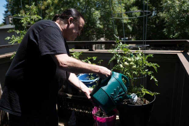 Tony Price keeps a small garden on his patio and shares the produce he grows. (Andrew Nixon/Capital Public Radio)