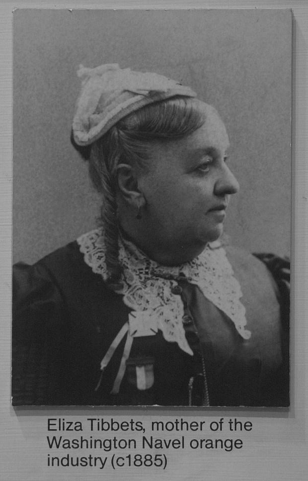 ORG XMIT: PE1250319D.jpg (3/19/03, Riverside, PE125) Copy photo of Eliza Tibbets, c. 1885 (NOTE -must credit Riverside Municipal Museum)