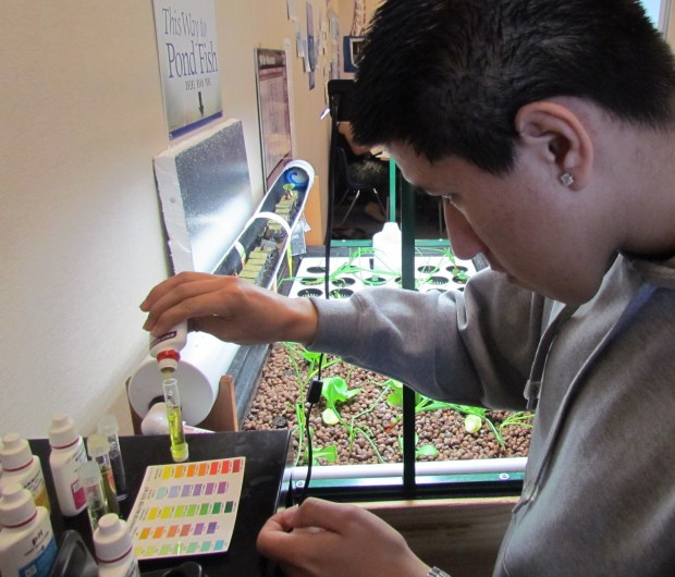 Senior Benjamin Martinez tests a water sample from an aquaponics garden and fishery at Mountain View High School in San Jacinto. DIANE A. RHODES / FILE PHOTO