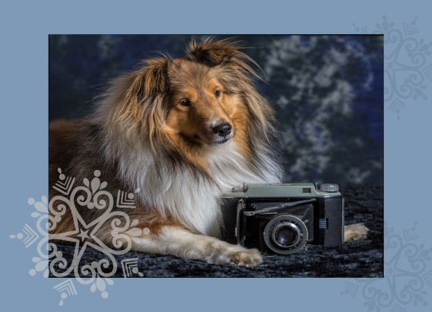 Alex Woodcock will take holiday photos of pets Nov. 11 at Paws in Redlands. (Photo by Alex Woodcock)