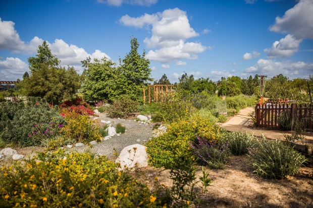 Learn how to transform your garden into a beautiful oasis while saving time, money and water. (Photo Courtesy of the Orange County Coastkeeper Garden)