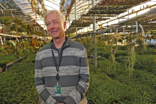 Paul Isley, who has been in the nursery business for 43 years and owns RainForest Flora in Torrance, estimates plant inventory losses in the millions of dollars when his property was destroyed in the Lilac Fire. Photo by Robert Casillas, Daily Breeze/SCNG