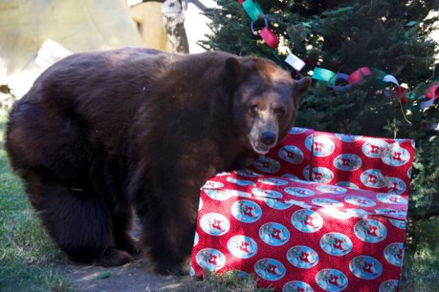The County of Orange and OC Parks invite the community to celebrate the holiday season with the animals of the OC Zoo on Saturday, Dec. 16. (Photo Courtesy of OC Zoo)