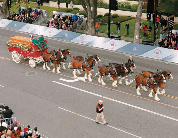 Rose Parade 2018 Equestrian Units Will Be Hoofing It To