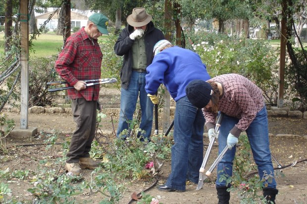 George Nash, left, directs a previous year's rose-pruning demonstration for the Redlands Horticultural and Improvement Society in Sylvan Park. (Courtesy Photo)