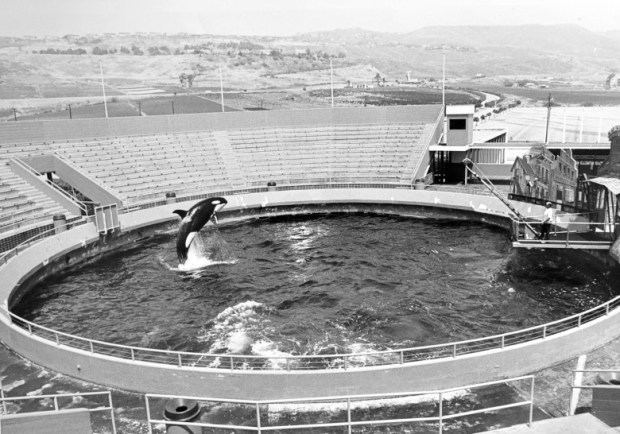 File photo: MARINELAND1973