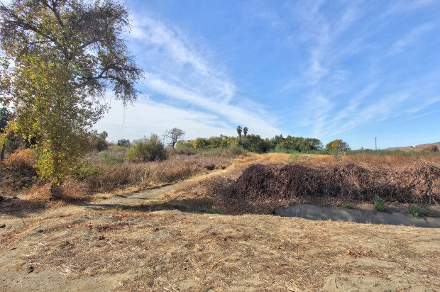 This vegetated area just west of Lake Evans in Riverside's Fairmount Park is where the 1980 Santa Ana River fire broke out.Photo by Steve Lech, contributing photographer