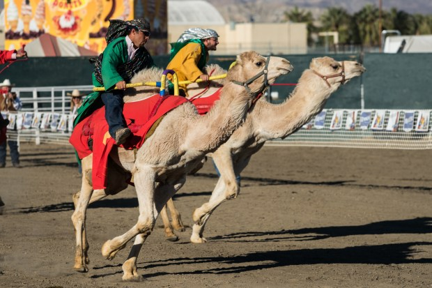 The Riverside County Fair & Date Festival kicks off on Friday, Feb. 17 and runs through Sunday, Feb. 26 at the Riverside County Fairgrounds in Indio.(COURTESY OF RIVERSIDE COUNTY FAIR & NATIONAL DATE FESTIVAL)