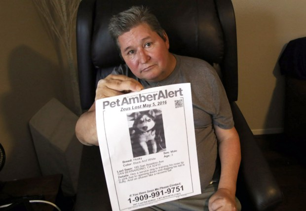 David Guindon, 52, of San Bernardino, holds a flyer he made for his lost Husky named Zeus at his home in San Bernardino, CA., Tuesday, February 6, 2018. David Guindon who microchipped Zeus, then lost the Husky, is trying to get Zeus back after learning that he was in the possession of a Lake Elsinore woman. Zeus is a 3 year old, male Siberian Husky with black and white markings. (Photo by James Carbone for the Riverside Press Enterprise)