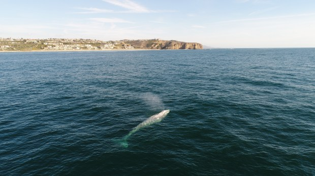 The Dana Point Headlands, in the distance, are a great place to watch for whales if you want to stay on dry land. Photo: Domenic Biagini/Capt Dave's Dolphin and Whale Safari