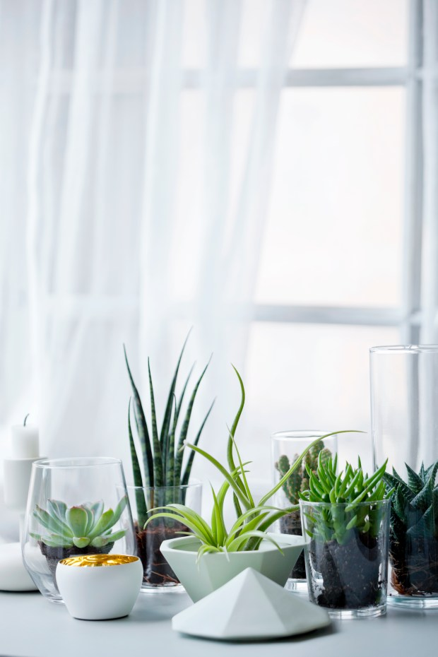 Propagating, Potting and other Tips for Indoor/Outdoor Plants How To Make Houseplant Cuttings