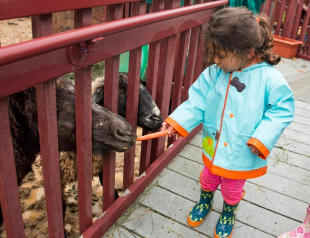 Francie Hayden-Roberts, 3, feeds the pony and goat at the Silverado Children's Center. (Photo by Leonard Ortiz, Orange County Register/SCNG)