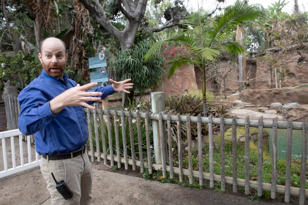 Zoo Director Ethan Fisher talks about some of the changes coming to the Santa Ana Zoo on Wednesday, May 2, 2018. The zoo is planning on updating exhibits and adding new animals. (Photo by Paul Bersebach, Orange County Register/SCNG)