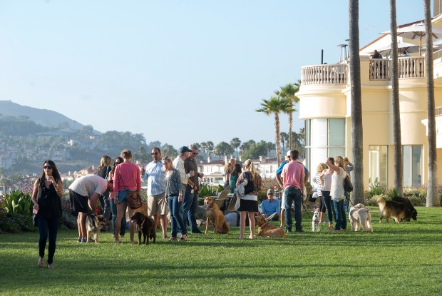 Dogs and people socialize in 2014 at a Yappy Hour at The Ritz-Carlton in Laguna Niguel. (Photo by Cindy Yamanaka, Orange County Register/SCNG)