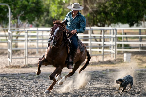 Bellator MMA Featherweight Aaron Pico rides his horse Canelo with his dog Lola following in Whittier, CA. April 20, 2018. (Photo by Hans Gutknecht, Los Angeles Daily News/SCNG)