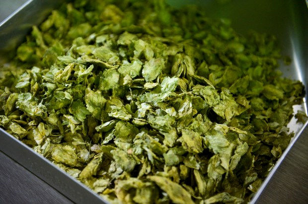 Hops just off the truck at Anheuser-Busch in Van Nuys. For the first time in almost 40 years, the brewery will open its doors to the public for a select number of tours this summer. Contact budweisertours.com to details. (Photo by David Crane, Los Angeles Daily News/SCNG)