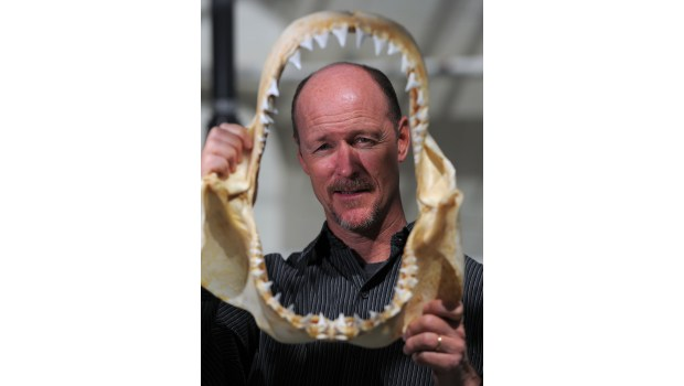 Professor Chris Lowe peers through the jaws of a 3-year-old great white shark at CSULB's shark lab in Long Beach, CA on Wednesday, May 7, 2014. Low will be giving a talk on sharks off of our coast Friday at the Cabrillo Marine Aquarium. (Photo by Scott Varley, Daily Breeze)
