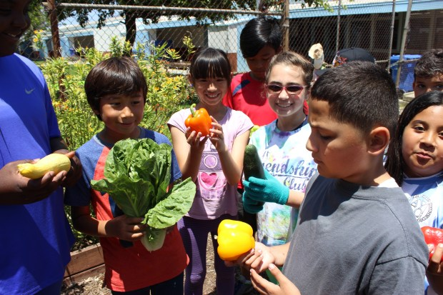 Lincoln Elementary School hold vegetables grown in the garden of the Redondo Beach school. The Redondo Beach Unified School District drastically reduced childhood obesity through its LiveWell Kids nutrition and physical exercise program.  Photo: Louis Casiano