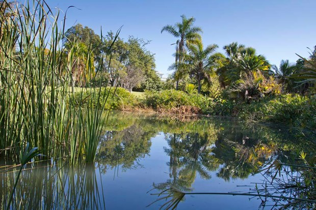 A free nature tour of the Fullerton Arboretum is offered June 23. (Photo courtesy of the Fullerton Arboretum)