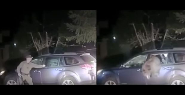 In two images from a video that has gone viral, a Placer County, California sheriff's deputy breaks a window on a Subaru Outback after a bear managed to break into the car and couldn't get out. Once the deputy breaks the window, left, the bear was able to climb out of the badly damaged vehicle.