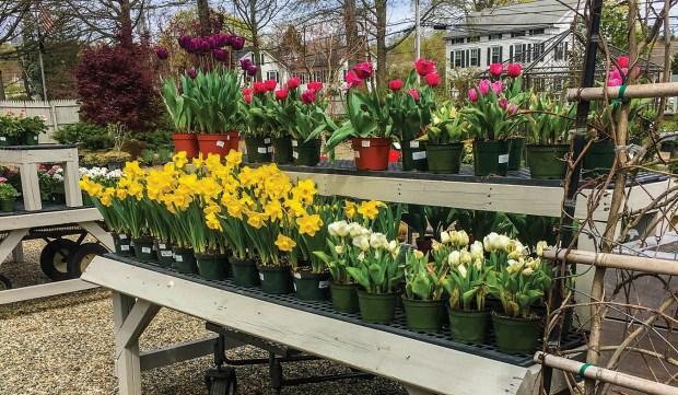best garden center nursery best of inland empire 2018 - Empire Garden