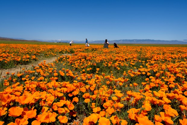 Wildflower season is here! These will be the best spots to