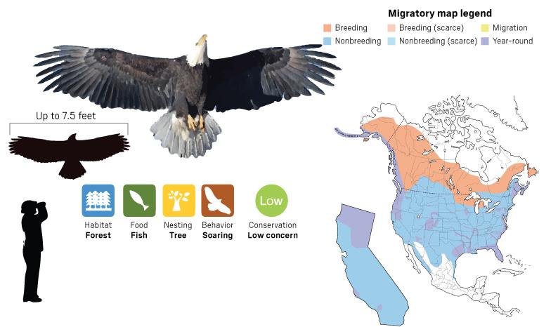 eagle map