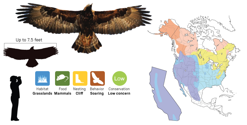 golden eagle map