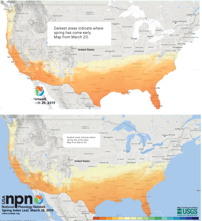 phenology maps