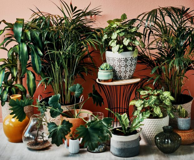 What to know about planters and flowerpots for your plants