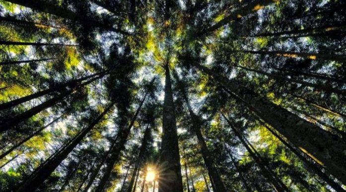 treedom regali solidali pianta un albero natale