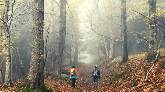 trekking a piedi in Campigna Parco Foreste Casentinesi cosa fare itinerario