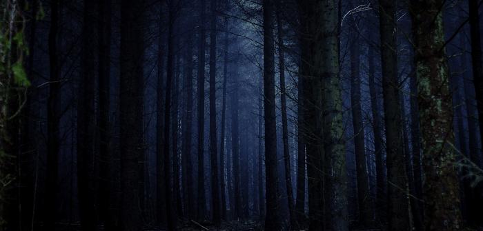 escursione di notte ad halloween nelle foreste casentinesi in compagnia di Mattia di Scomfort Zone