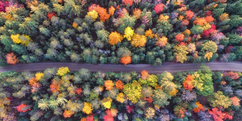 La storia di Treedom e gli alberi piantati