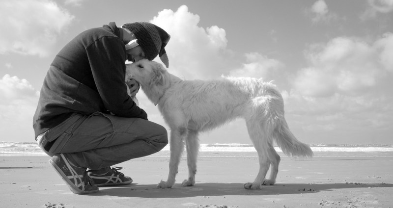 dog and pet parents quality time together