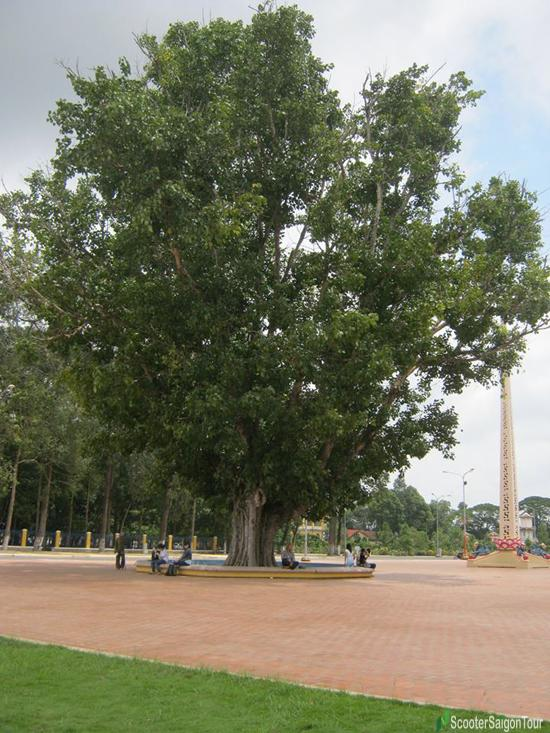 tree by monk Thera Narada in Tay Ninh cao dai temple