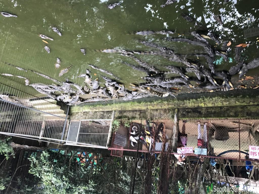 In Mekong Delta In Mekong Delta