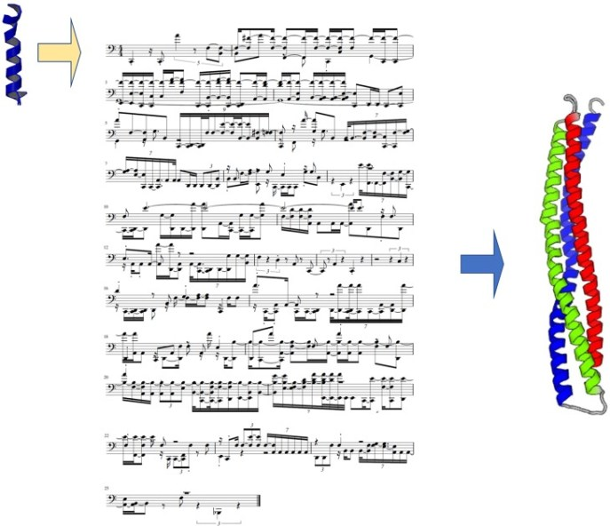 Chi-Hua Yu and Markus Buehler used a neural network to design new proteins. Using amino acid sonification, the neural network predicted a musical score, which represents the structure of the new protein. Image from Yu and Buehler's paper.
