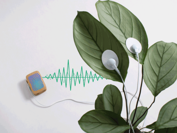 PlantWave is a device for sonifying micro-movement data of plants. Screenshot from PlantWave.