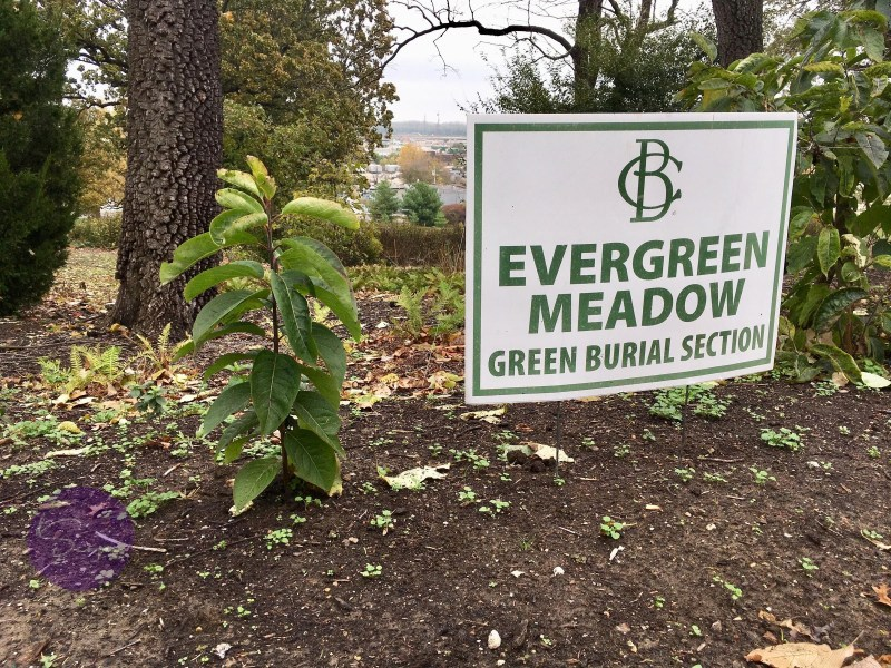 The Evergreen Meadow at Bellefontaine Cemetery is a planned short-grass prairie set aside for green burials. Credit Sebastian Martinez / KBIA