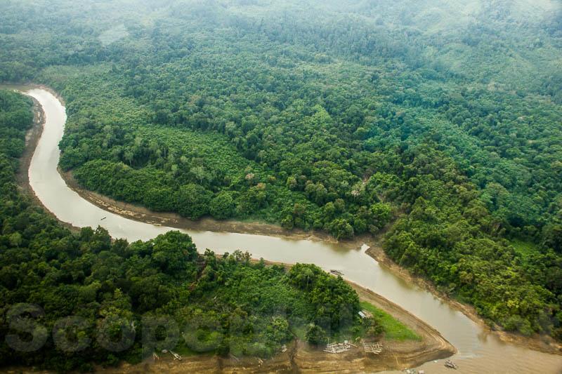 Sungai mengular di tengah hutan perawan