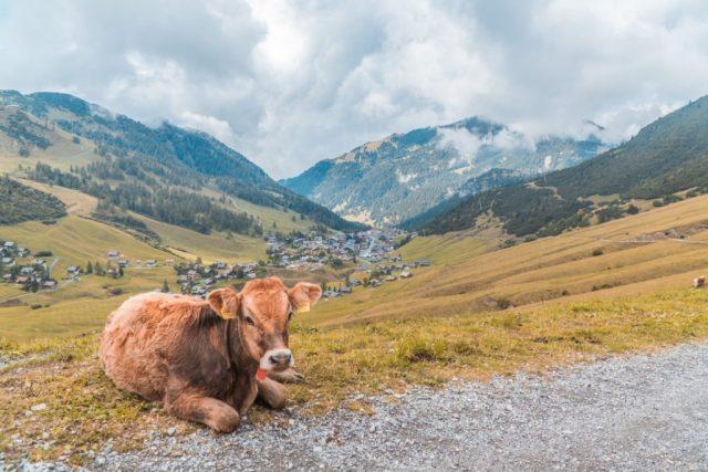 Cosa vedere a Vaduz