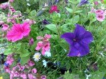 Garden Centre Trip
