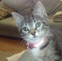 Izzy at 9 weeks