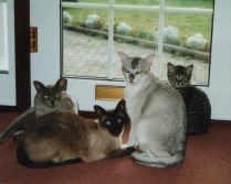 Wonderful Cats
