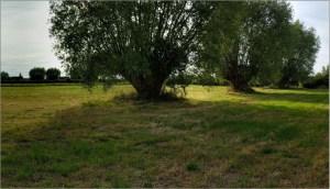 terrain vague en verdure avec arbres au centre