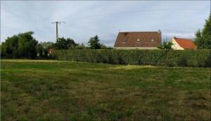 terrain vague en verdure avec maison en arrière plan