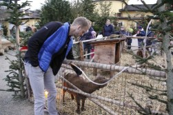 There was a small petting zoo at the Christmas market...